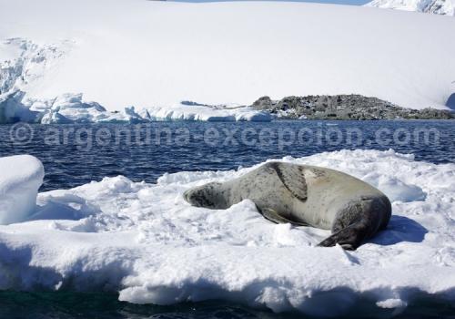 croisiere-antarctique (3)