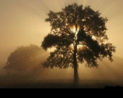 arbre_2-a19d2-53043
