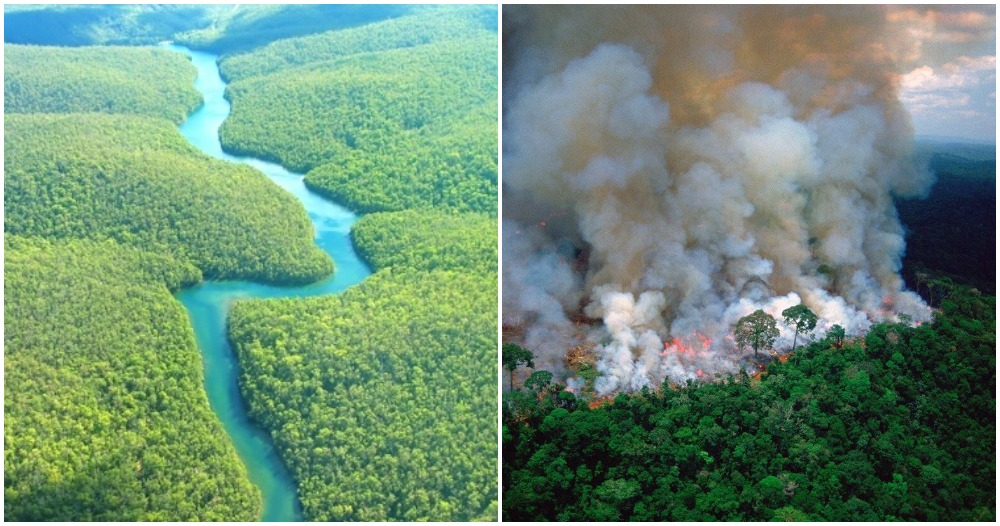 did-you-know-the-amazon-has-been-burning-for-3-weeks-we-could-lose-20-of-oxygen-in-the-world-world-of-buzz
